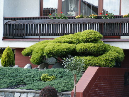 bonsai centrum milan mad ry zahradn centrum tvrdonice. Black Bedroom Furniture Sets. Home Design Ideas